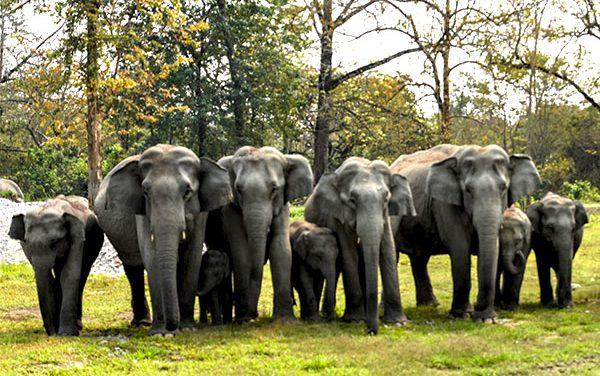Manas National Park Assam Day 1.